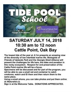 Tide Pool School @ Cattle Point Park